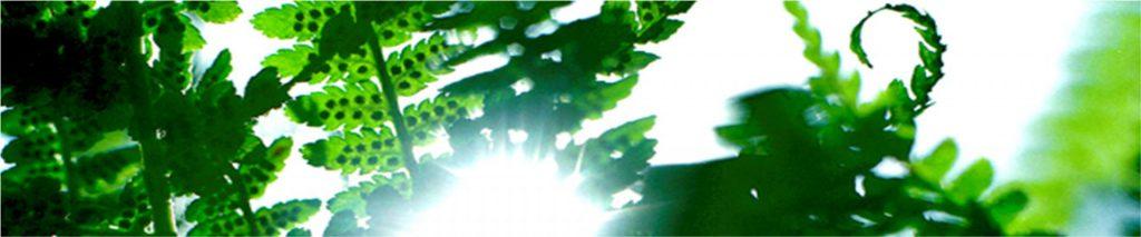 gronablad